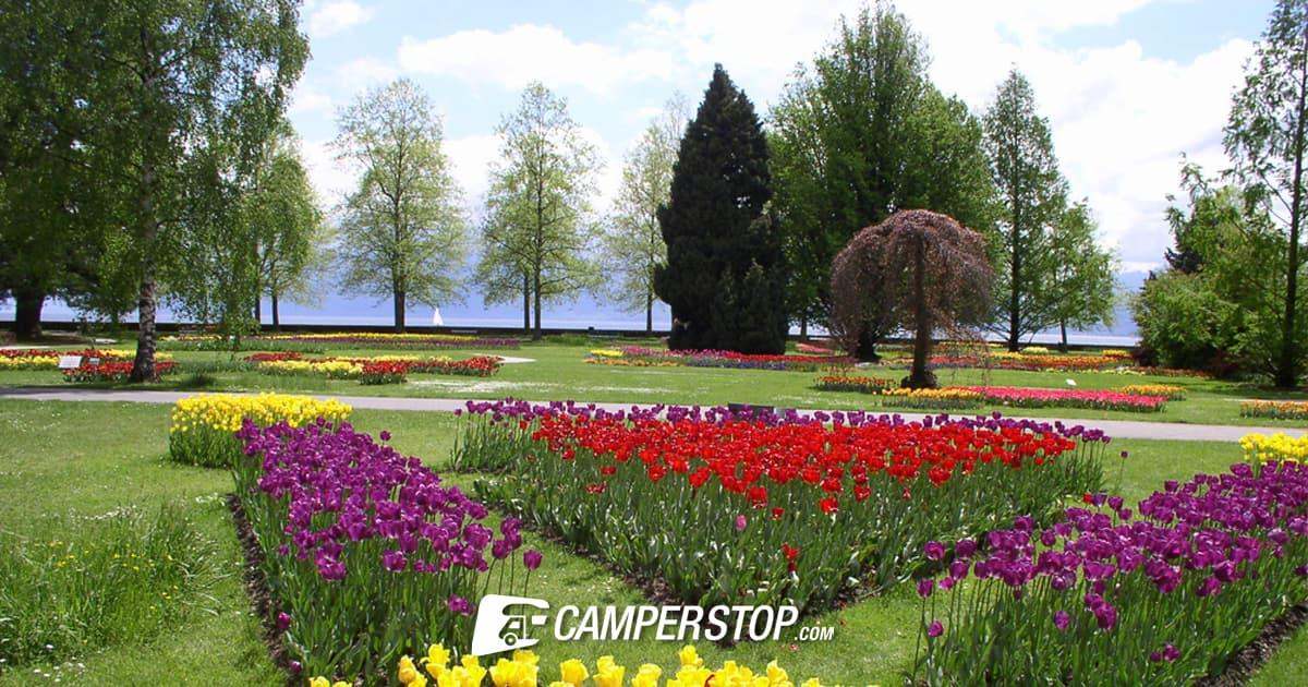 Aan het Meer van Genève bloeien typisch Nederlandse tulpen.