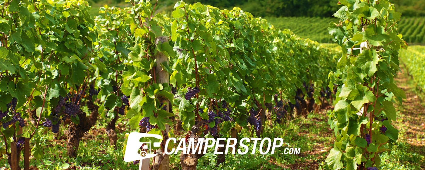 Visit the wine regions of France by motorhome